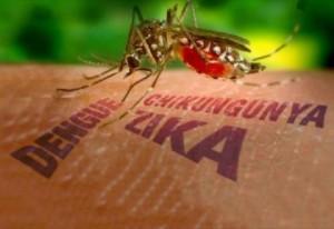Blindando a casa contra o mosquito
