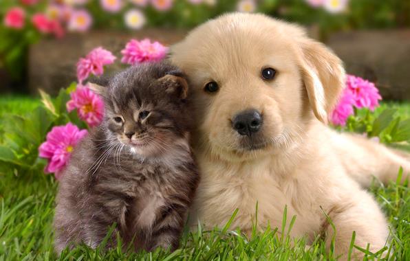 convivencia-pacifica-com-animais-em-condominios